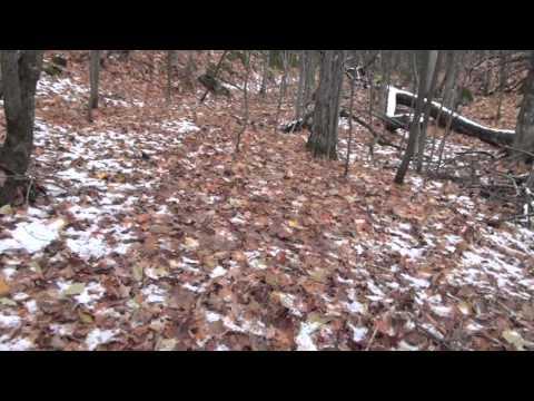 duke dog proof raccoon trap instructions