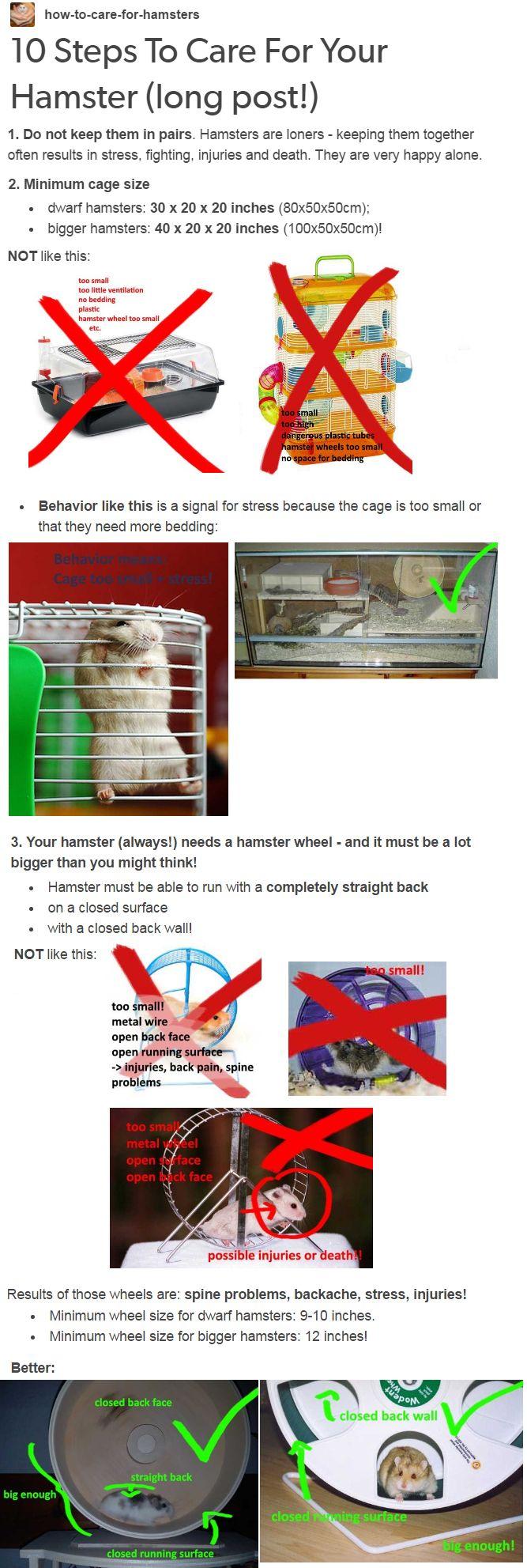 build a bear care instructions