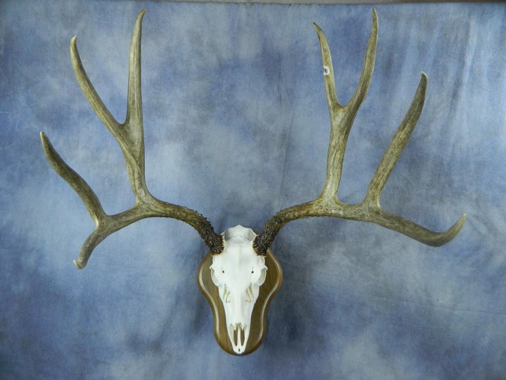 european mount deer skull instructions